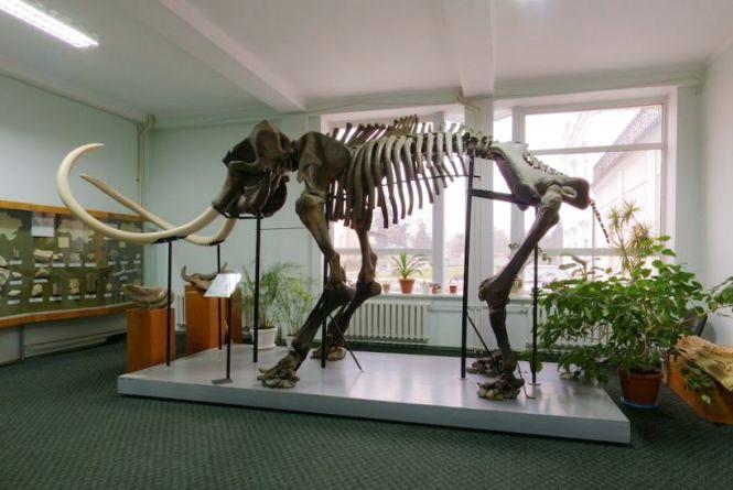 У краєзнавчому музеї для дітей проведуть інтерактивну екскурсію