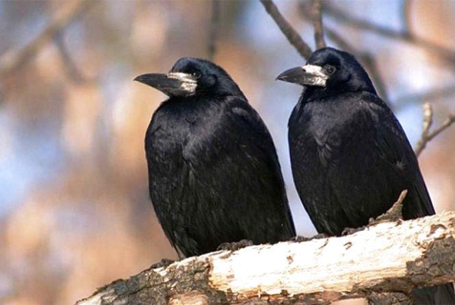 День Герасима: в оселях підмітали віником з полину та спостерігали за птахами