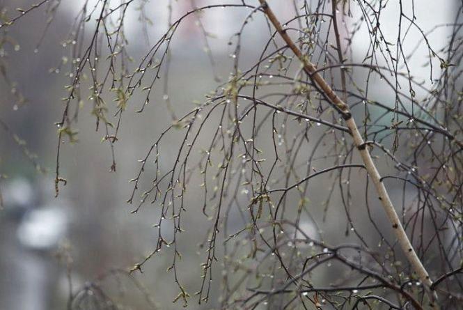 Погода у Вінниці на сьогодні, 25 березня
