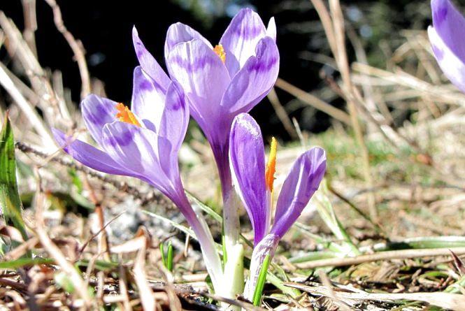 Погода у Вінниці на сьогодні, 26 березня