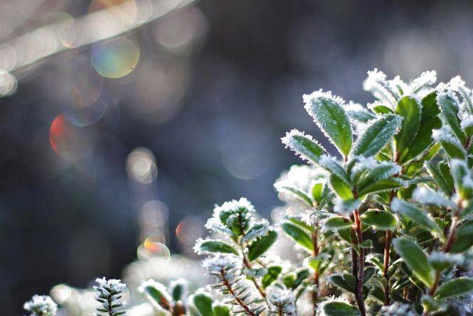 Нічні заморозки: вінницькі синоптики розказали про погоду до кінця тижня