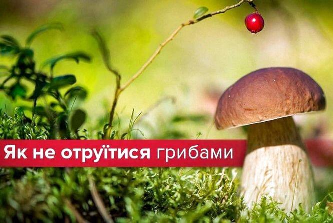 Збирайте гриби правильно: поради, як не отруїтись