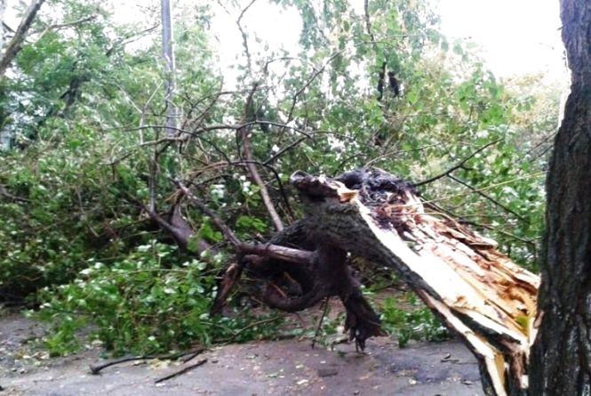 Через слизьку дорогу автобус з'їхав у кювет, MAN застряг у багнюці, а дерево перекрило шосе