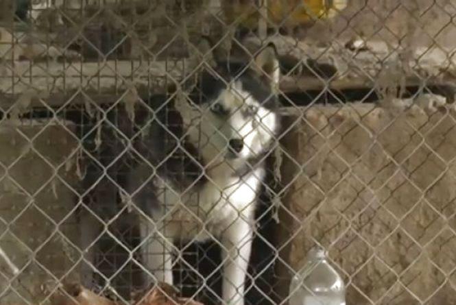 На Старому місті ветеринар, який розводить собак, знущається з тварин