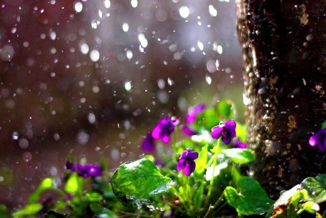 Погода у Вінниці на сьогодні, 22 травня