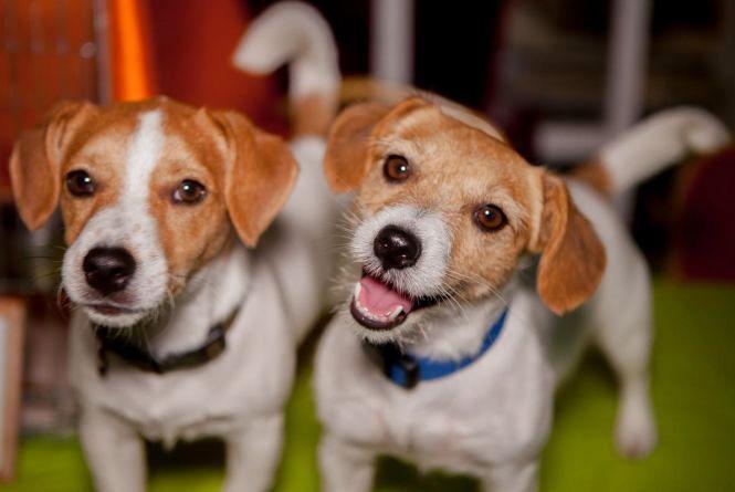 «Хвіст-фест»: у місті пройде ярмарок-виставка для допомоги бездомним тваринам