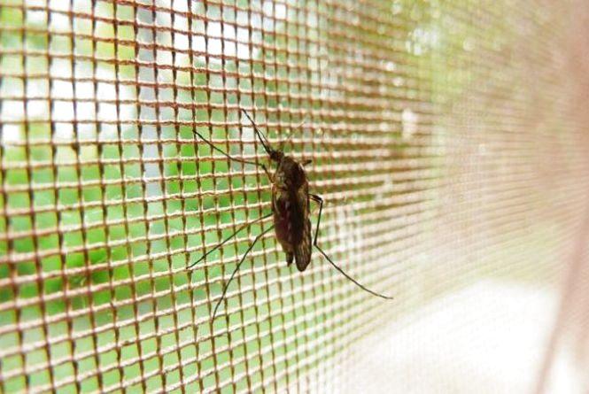 Якомога далі від води та не вбивайте комарів: яке сьогодні свято,  заборони та прикмети