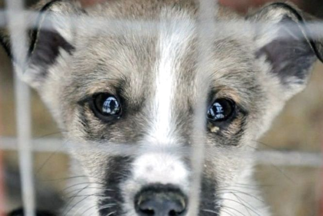 За рік в області виявили 13 фактів знущання з тварин