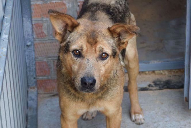 Як у Вінниці збираються «боротися» з безпритульними тваринами