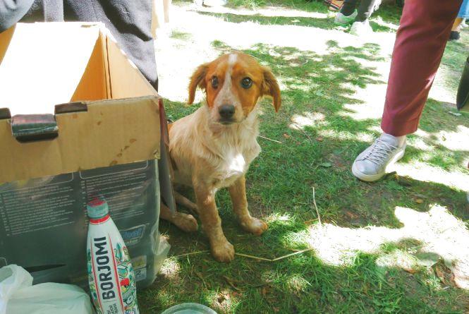 «Хвіст-фест»: бездомні кішки та песики шукали собі господарів. Волонтери сподіваються на повторення акції
