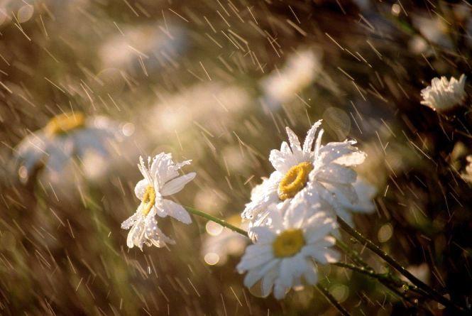 Сильні дощі та пекельна спека: синоптики розповіли про погоду в липні