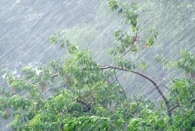 Біля Немирова буревій зривав дахи з будинків та завалював дороги деревами