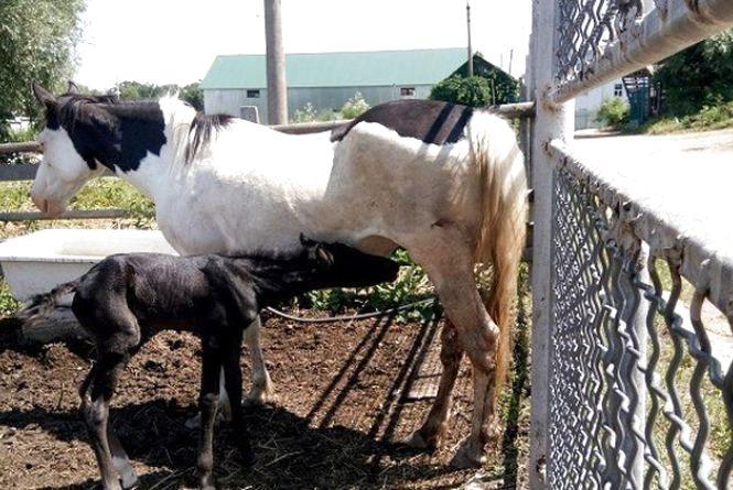 Двоє малят народилися у родині коней Подільського зоопарку