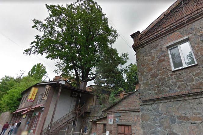Сторічний дуб Гаврило оголосили ботанічною пам'яткою Вінниці