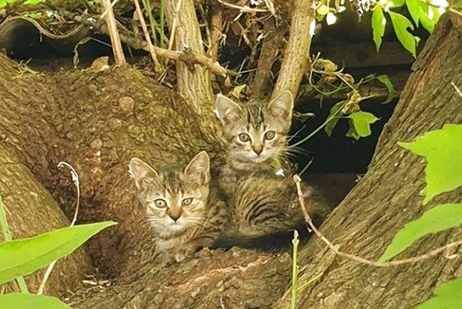 «Хвіст-фест»: у Вінниці знову проведуть ярмарок безпритульних тварин