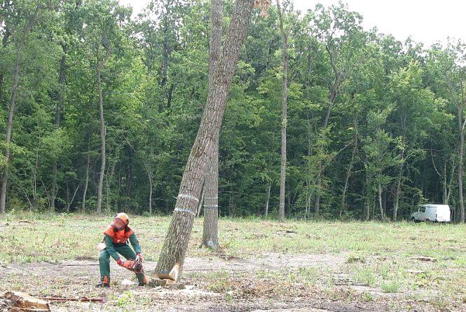 Змагання вальників лісу 2019: як проходило та хто переміг