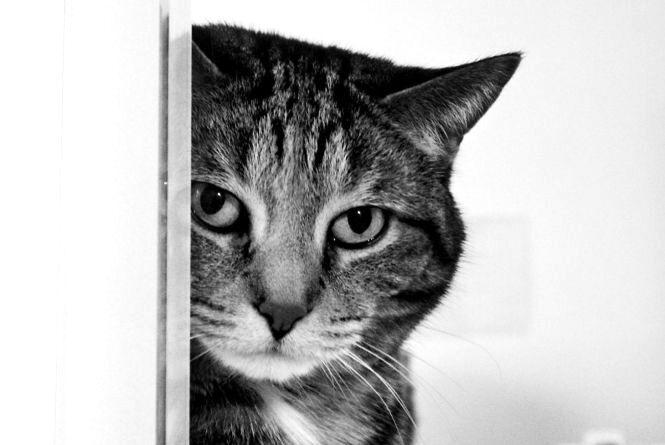 Вирок за кішку об асфальт. Як судили вдівця, що зігнав злість на домашній тварині