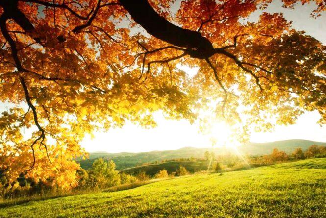 Літо ще побалує сонцем: синоптики розповіли про теплі дні на тижні
