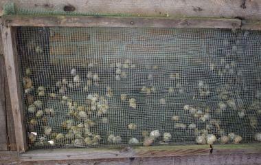 М'ясо та ікра равликів: делікатеси Вінниччини виходять на Європу