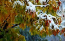 Мокрий сніг і похолодання: Гідрометцентр шокував прогнозом на тиждень