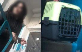 Операція «Врятувати кота»: як вінничани визволяли пухнастого із зачиненої квартири