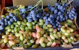 Що по чому. Скільки коштує картопля, виноград та груша на вінницьких ринках