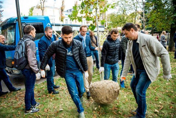 Саджанці платанів для вінницького парку